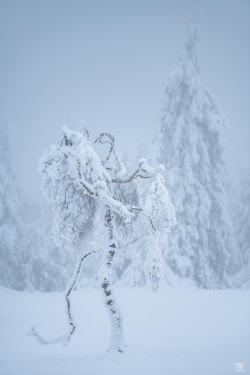 """""""Dem Winter trotzend"""" (B2445)"""