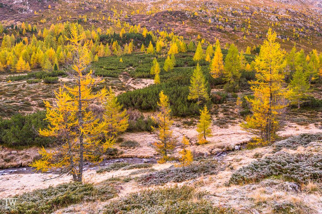 Hier ein Bild der wunderbaren Lärchen mit Bodenfrost – an dieser Stelle (2100m) war es wirklich frisch (B1132)