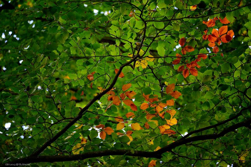 Herbst in Köln-Lindenthal (B82)