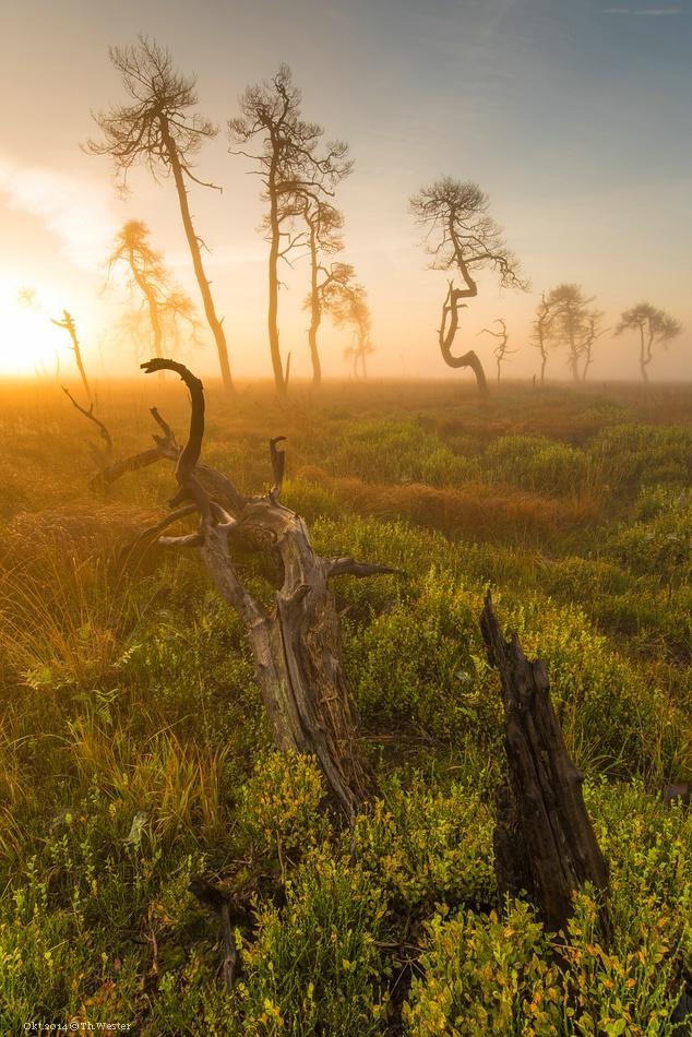 Zurück zum Morgen: auch nach Sonnenaufgang war die Nebelstimmung noch faszinierend, zumal die Landschaft in diesem Hochmoor auch im Oktober noch tolle Farben zeigte (B195)