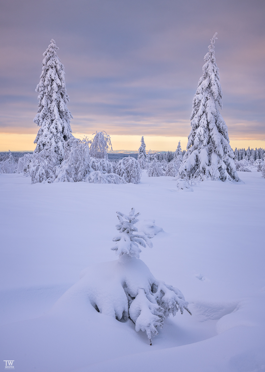 Zu diesem Zeitpunkt war die Färbung am schönsten; der Weite Blick in die Landschaft war wunderbar. (B2439)