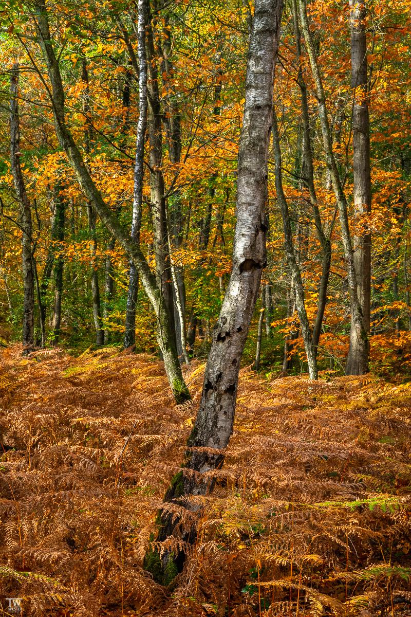 An vielen Stellen hatte die Herbstfärbung allerdings schon ihren Zenit überschritten (B2271)