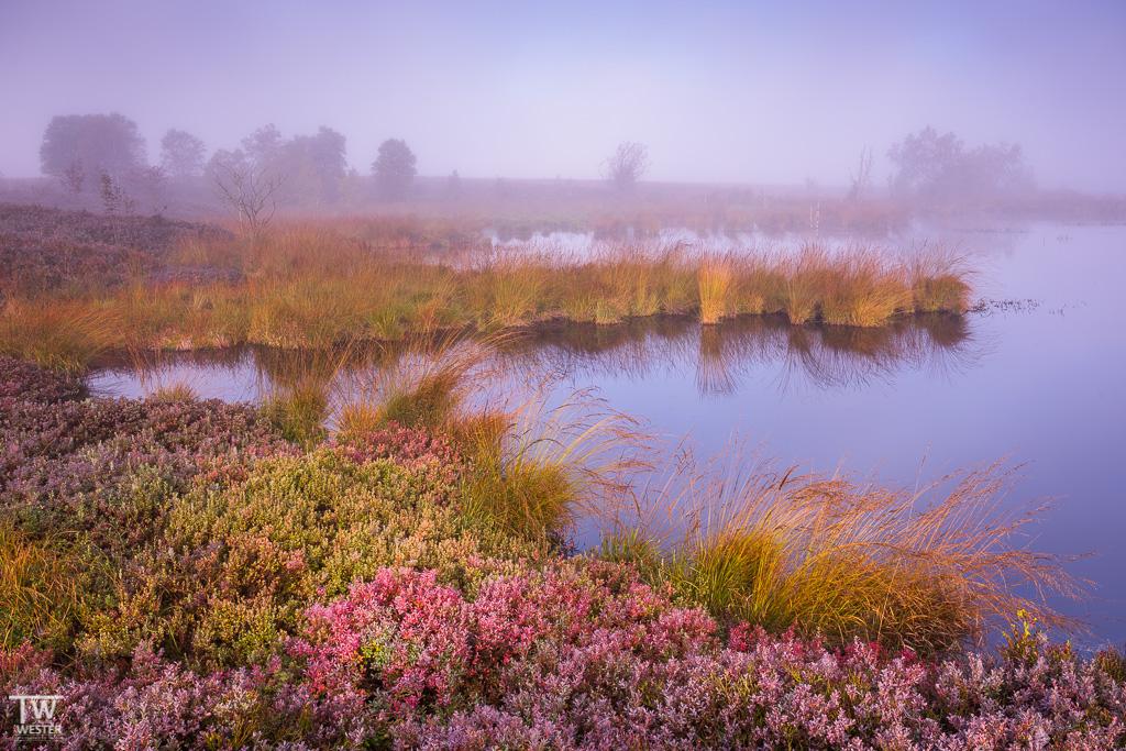 Bemerkenswerte Farbvielfalt im Herbst (B1200)
