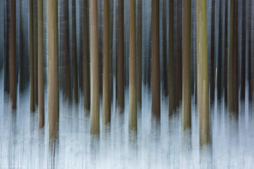 """Und schließlich noch ein """"Wischer"""" aus dem Wald (B261)"""