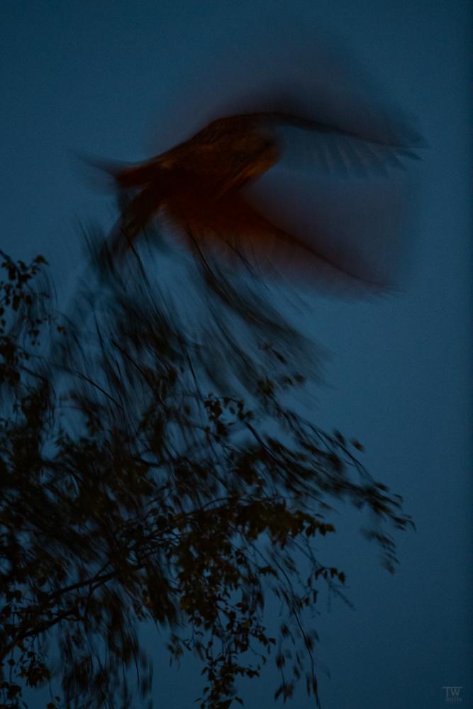Abstraktes aus dem Nachthimmel (B2709)