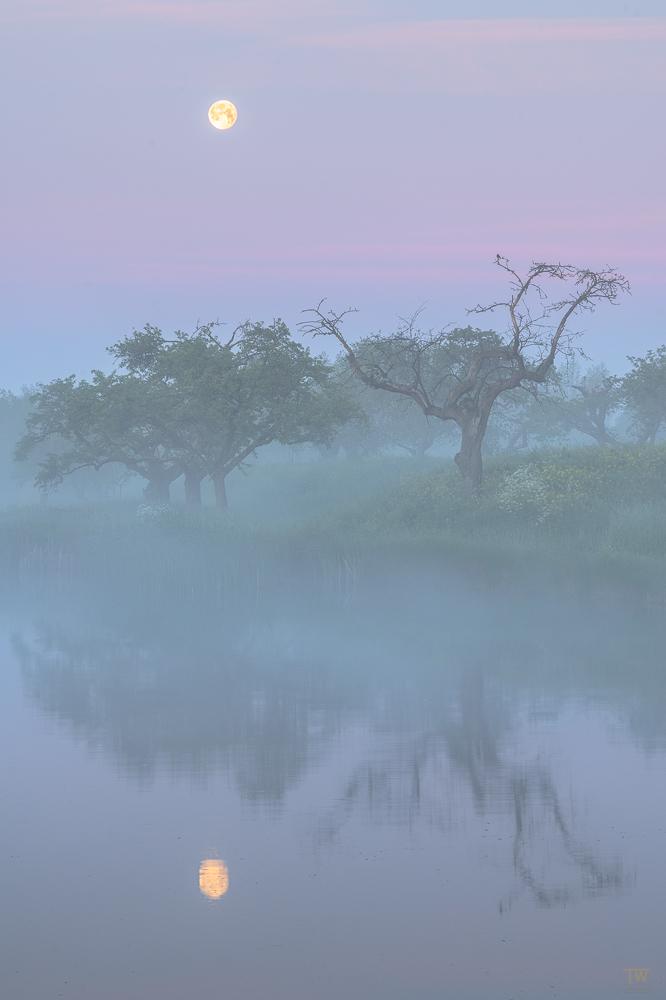 Morgenstille (B2593)