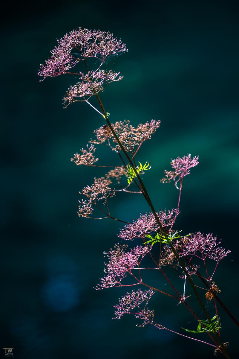 Mit filigranen Pflanzen am Uferrand (B2210)