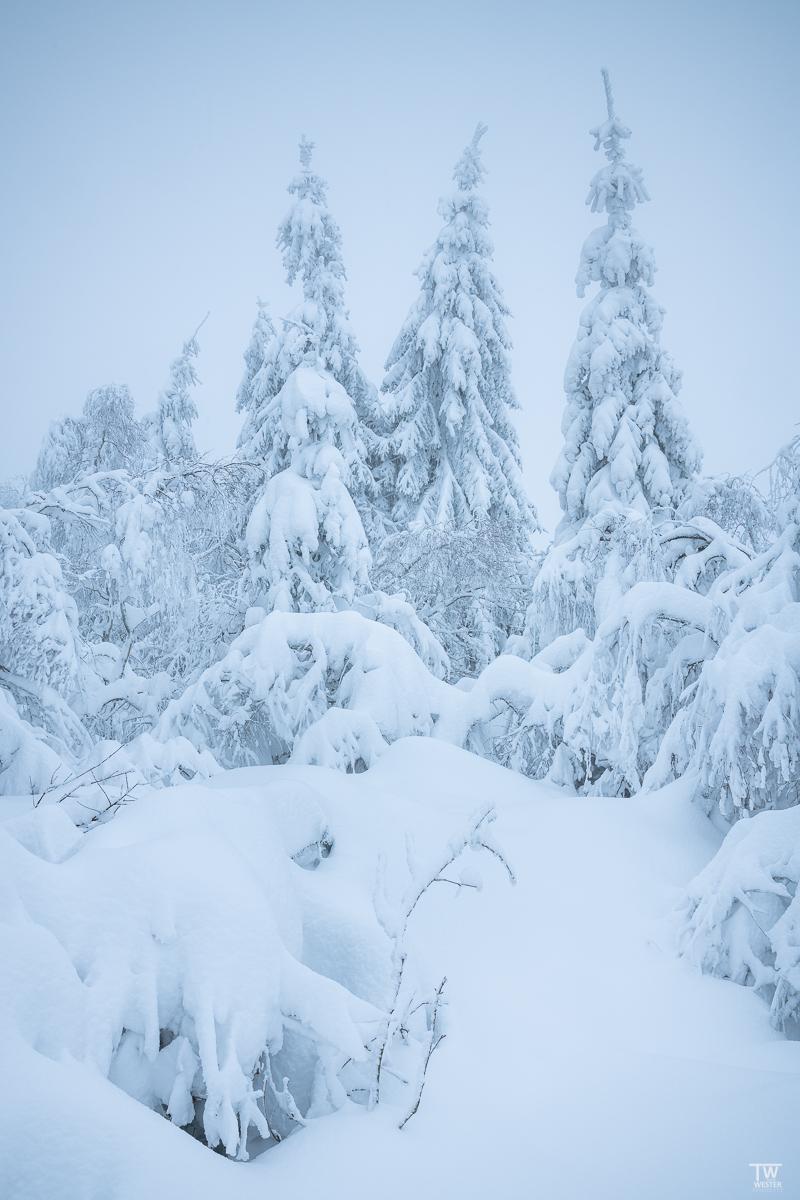 Hier hatte der Tiefschnee den Weg in den Wald glatt versperrt (B2339)