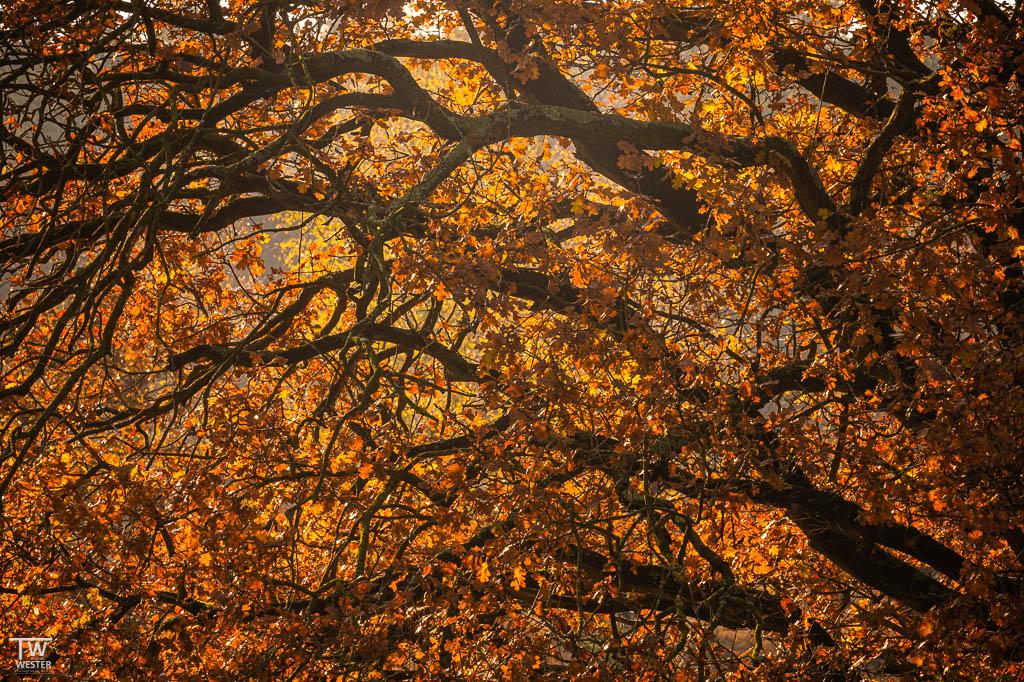 Auch Detailsaufnahmen der Herbstbäume machen richtig Spaß (B1844)