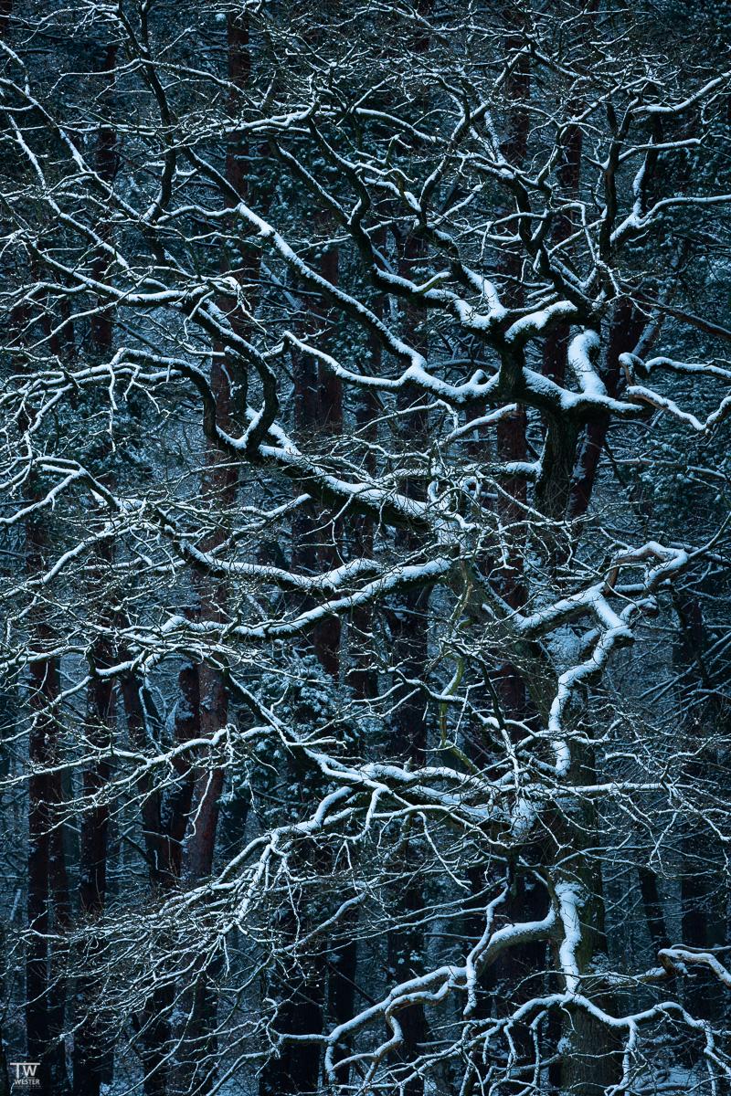 Mich faszinierten auch die Schneebedeckten großen Bäume vor dunkler Kulisse…. (B2335)