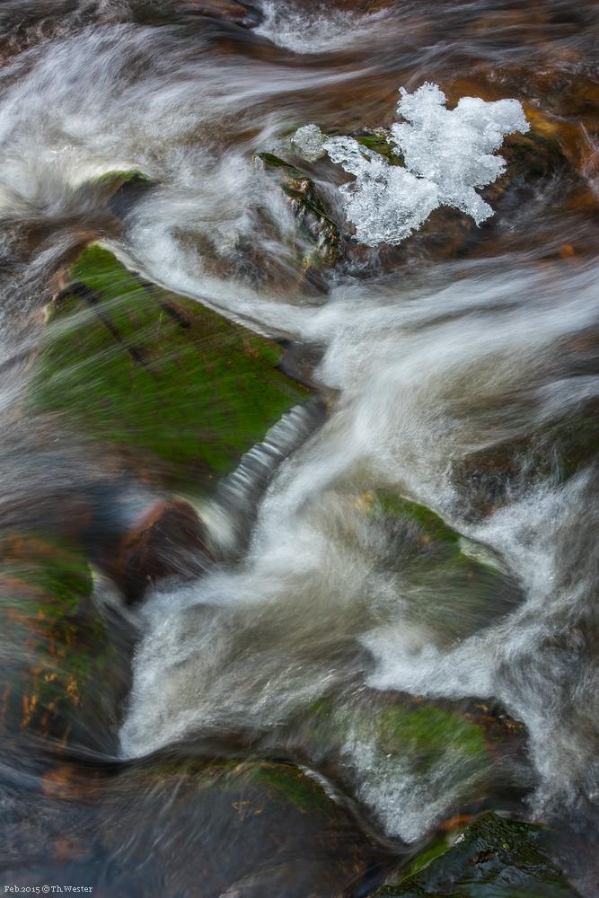 Das Eis des kleinen Baches begann bereits zu schmelzen, das Grün des Mooses war für die Jahreszeit sehr satt (B273)