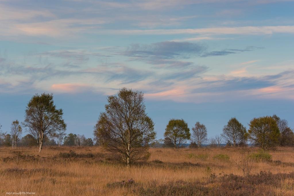 """Es folgen drei Bilder von meinem ersten Besuch des Naturschutzgebietes """"Hohes Venn"""" in Belgien: zunächst ein Eindruck der Landschaft vor Ort (B187)"""