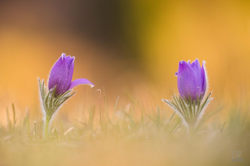 Nachdem die letzten zwölf Serien eher den Schwerpunkt der Landschaftsfotografie hatten, begab ich mich endlich mal wieder in die Welt der Flora (B918)