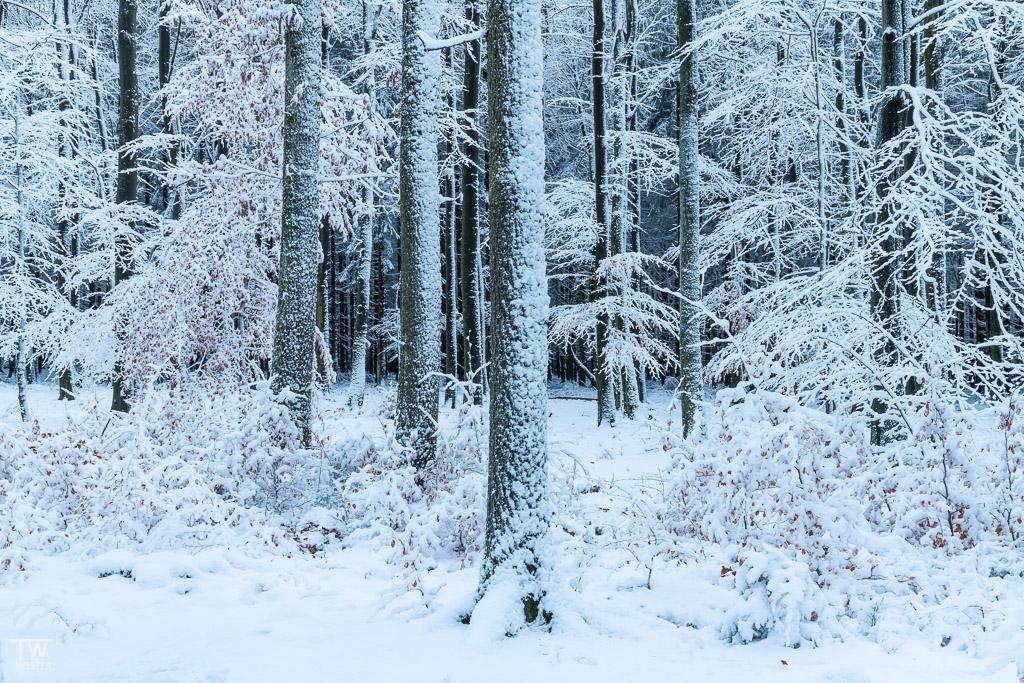 """Am Nachmittag wollte ich eigentlich zum """"Brackvenn"""", doch auf dem Weg dahin zog mich noch dieses Waldstück in seinen Bann (B1547)"""