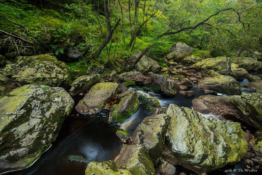 Dieses Bild finde ich im Grunde nicht sonderlich schön, jedoch wollte ich mal zeigen, wie trocken das Flussbett zur Zeit an der Hoegne ist (B689)
