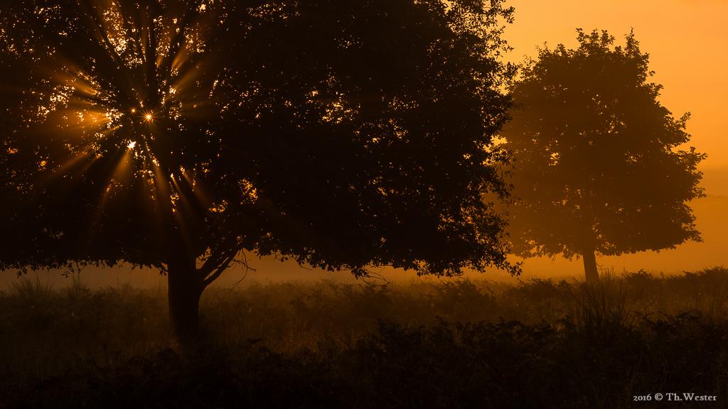 Wenn ein ausgeprägter Bodennebel in den Heidelandschaften auf pure Sonne trifft, dann ergeben sich früh morgens extreme Lichtstimmungen (B664)
