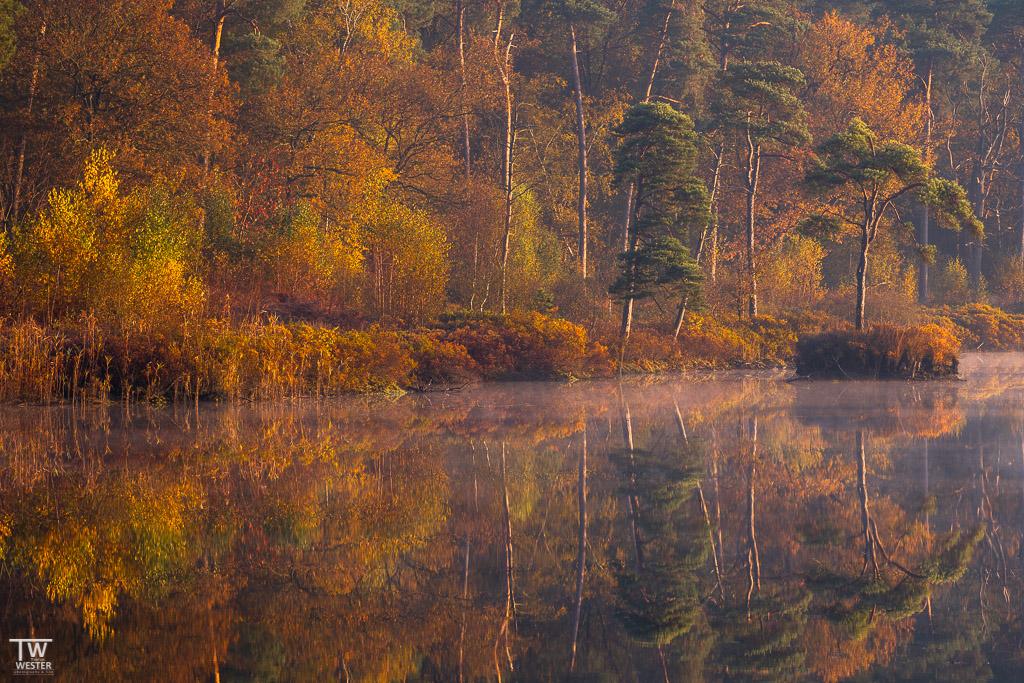 Herbstfarben am See (B1837)
