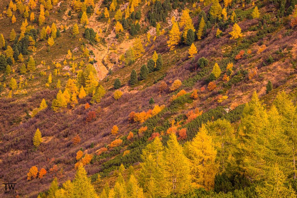 Wunderschöne Lärchen und Herbstfarben im feinen Abendlicht (B1181)