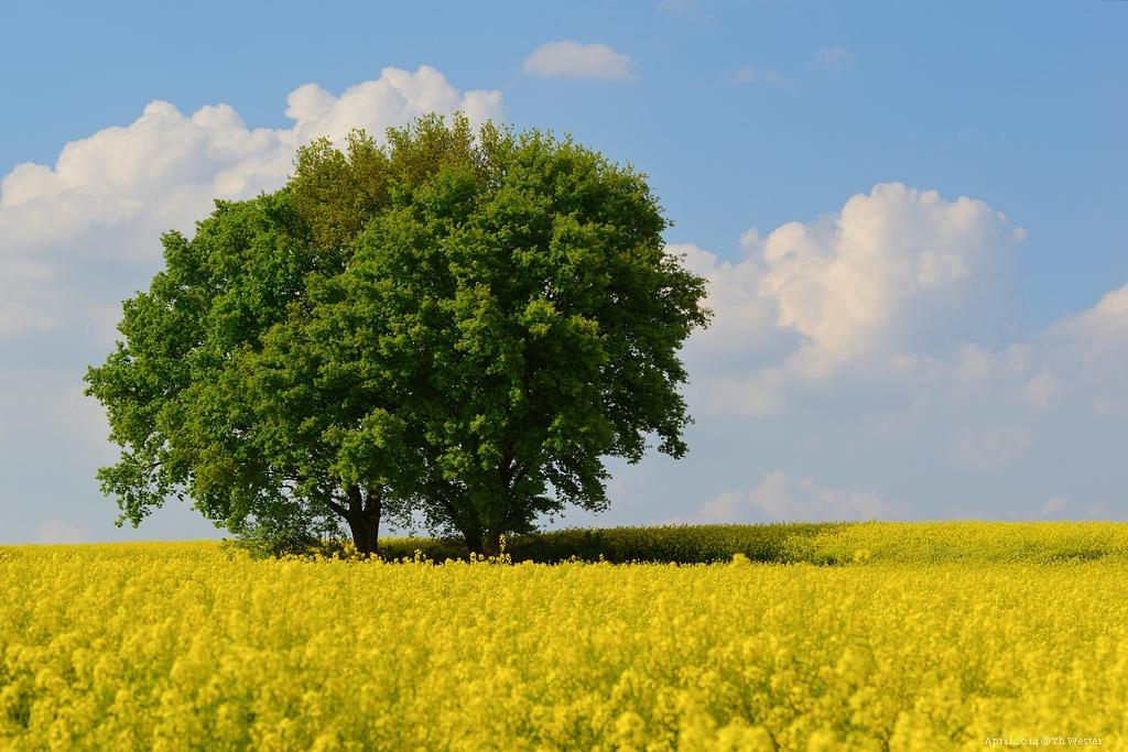 """Direkt angrenzend zum """"Wald der blauen Blumen"""" (B142)"""