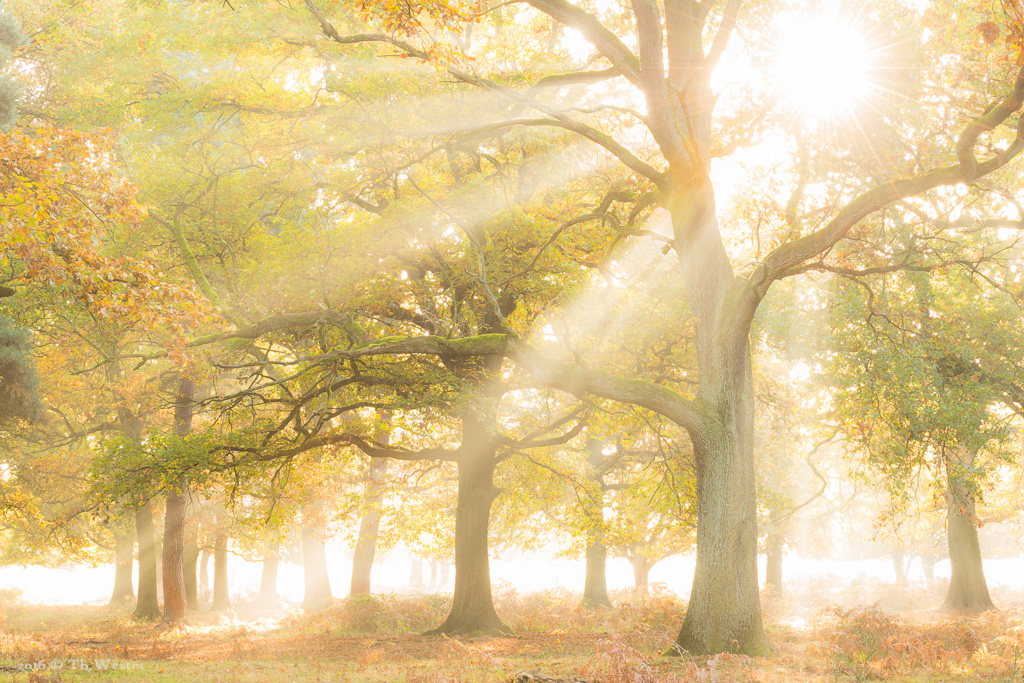 Eine bewusst überbelichtete Waldszene (B578)