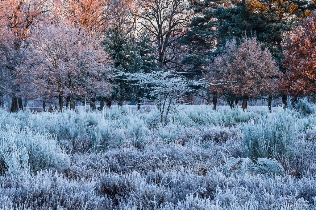 Die Büsche der Heidelandschaft waren komplett mit Raureif bedeckt: zusammen mit den letzten Spätherbstfarben und schönem Morgenlicht ergeben sich tolle Farben (B849)