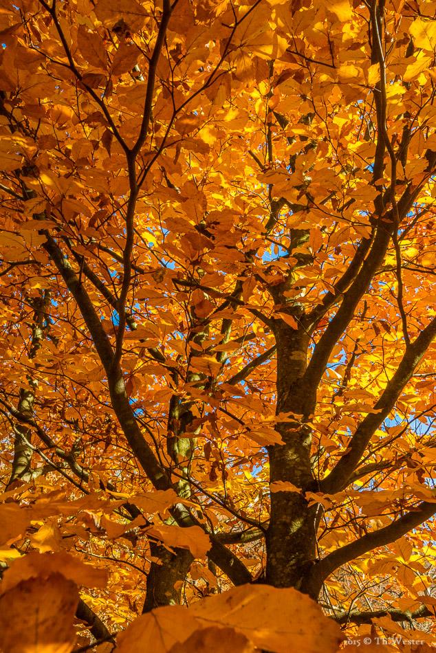 Herbst pur (B405)