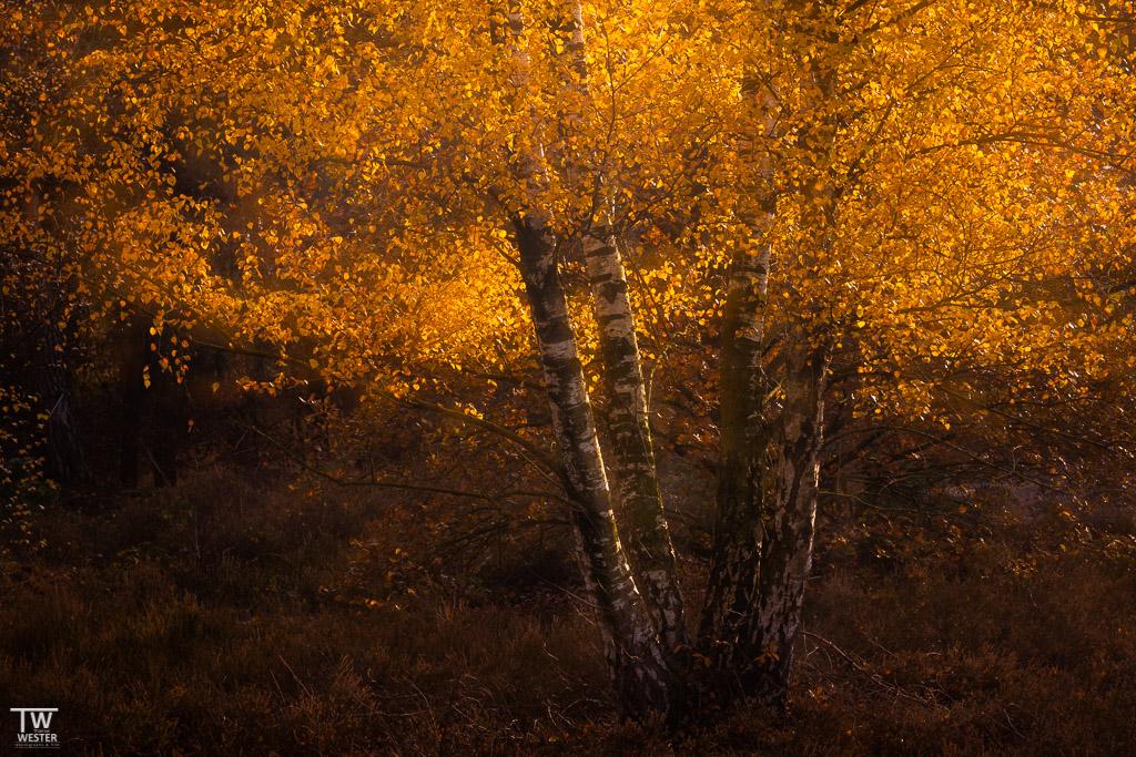 …und zu guter Letzt mein persönliches Lieblingsbild dieses Herbstes (B1830)