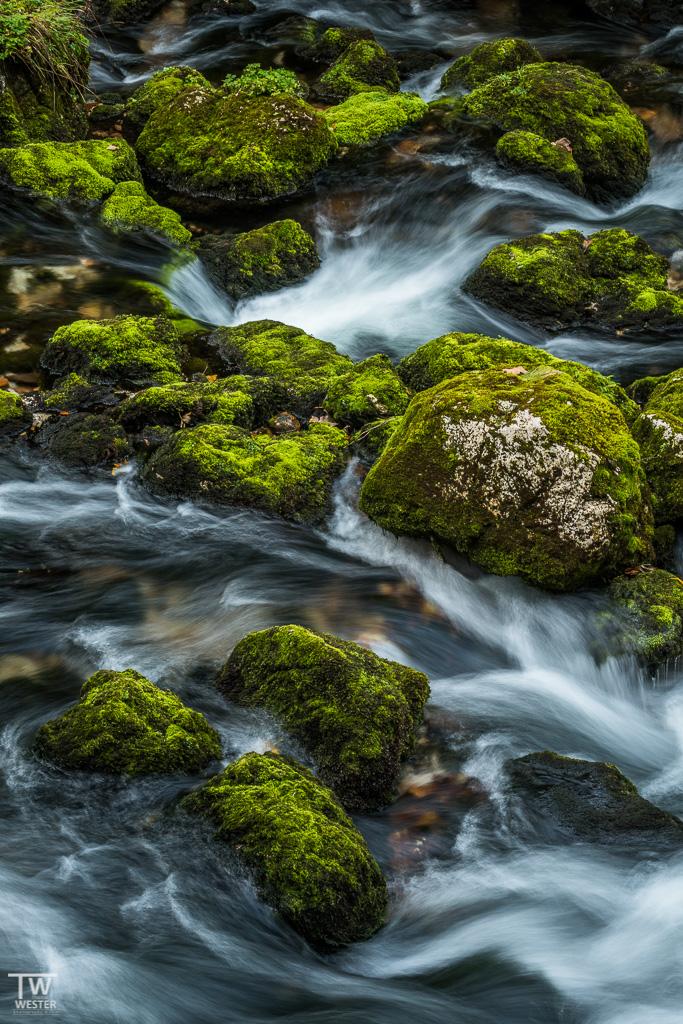 In Österreich waren die Steine trotz der fortgeschrittenen Jahreszeit noch sehr grün (B1133)