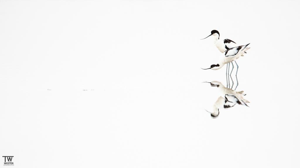 Bird-Highkey (B1654)