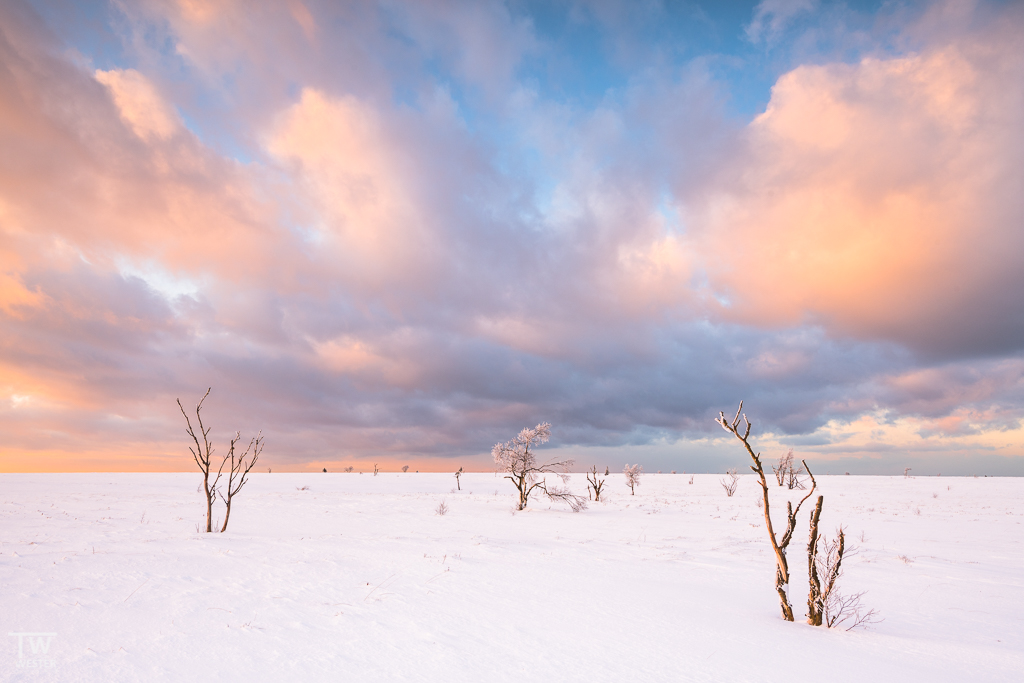 Mit der Sonne direkt im Rücken: solch wunderschöne Pastellfarben kannte ich bisher nicht (B1264)