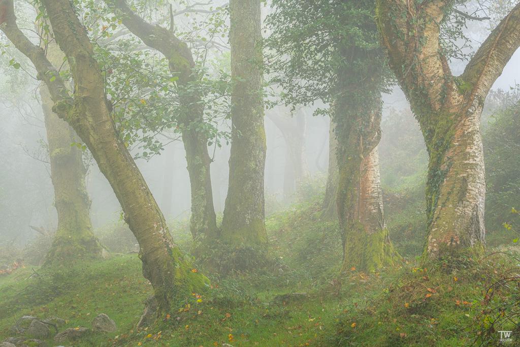 Auch im Pico wurde es trotz Nebel immer heller… (B1789)