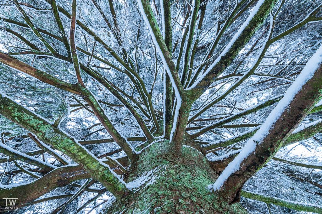 """""""Im Inneren"""": die extreme Belichtung ergab sich durch die Reflektion des hellen Schnees unterhalb des Baumes (B1258)"""