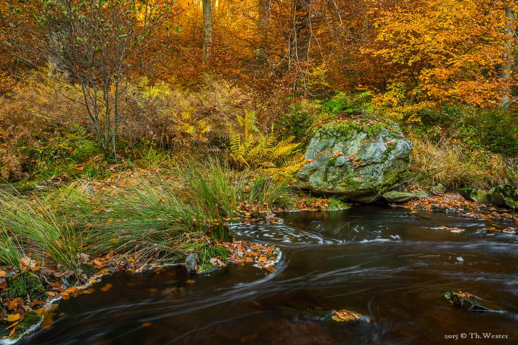 Ein sehr naturbelassenes Bach-Ufer (B406)