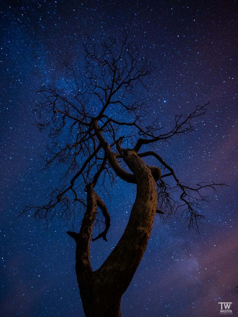 Sternendetails (B1410)