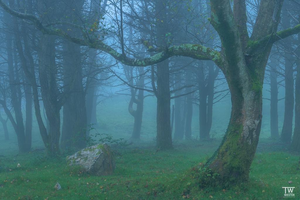 Beginnen möchte ich mit ein paar mystischen und zugleich typischen Eindrücken aus Asturien; hier im Pico de Europa (B1798)