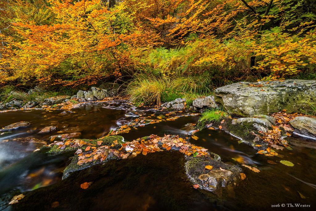 ...zeigte sich an vielen Stellen bereits die volle Herbstpracht (B771)
