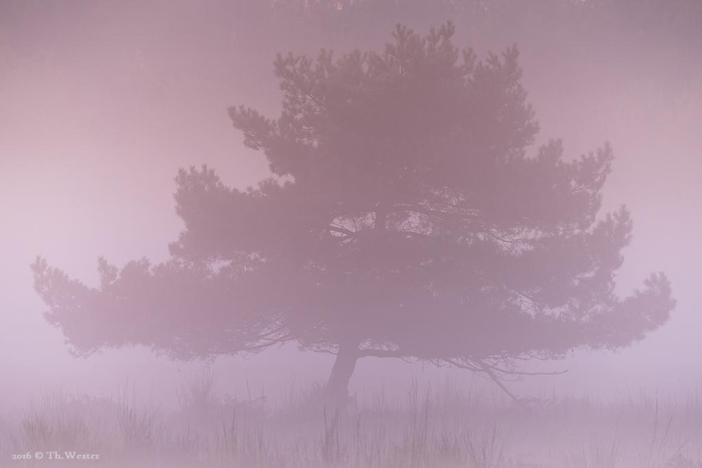 Frühnebel, kurz vor Sonnenaufgang (B760)
