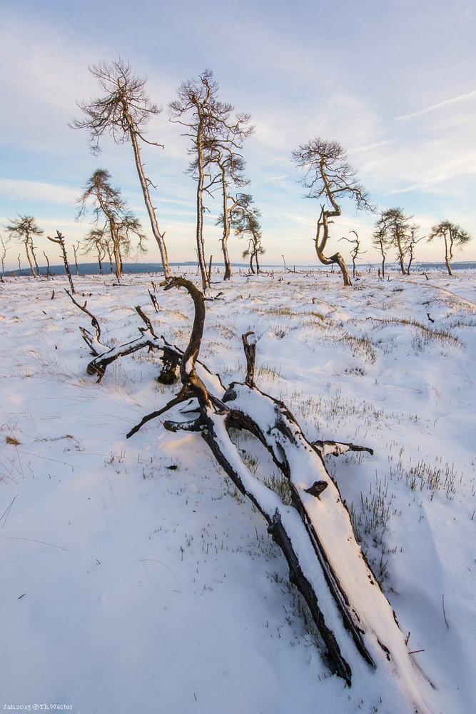 Hier eine Perspektive, die ich dieses Jahr schon einmal ablichten konnte, diesmal im Schnee... (B268)
