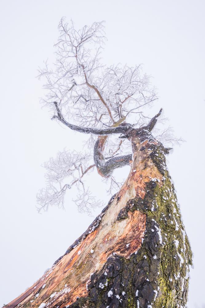 Dieser eine Baum hatte es mir wirklich angetan (B258)