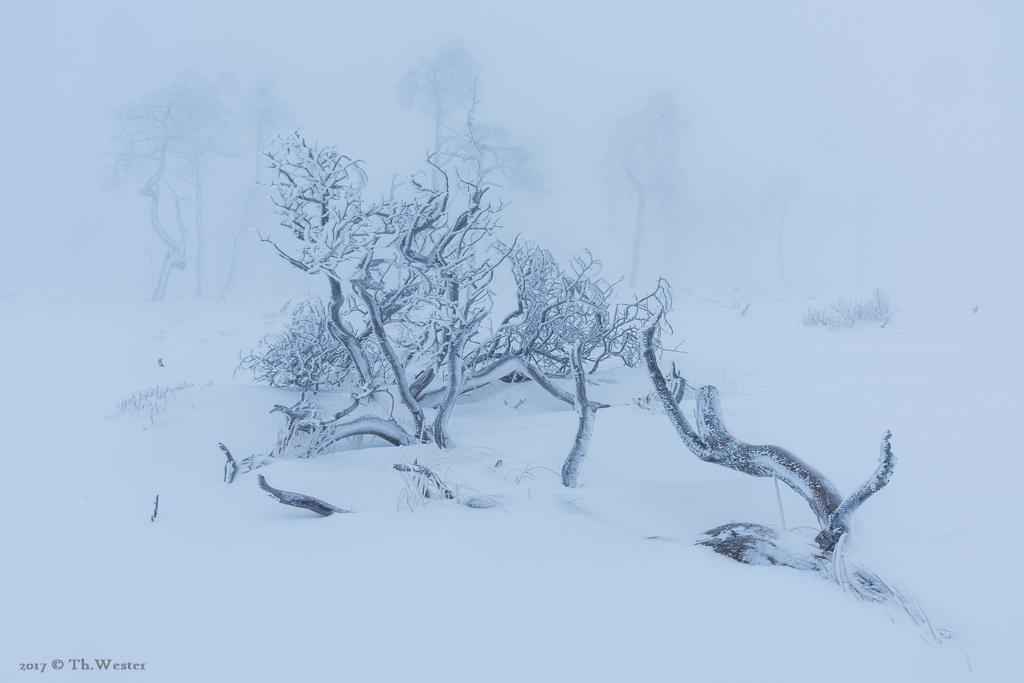 Selbst die umgestürtzten Bäume hatten eine Faszination (B886)