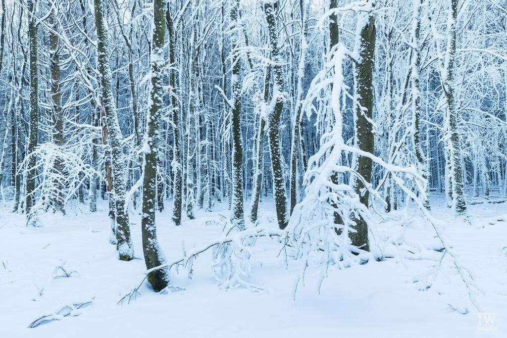 Frozen (B1225)
