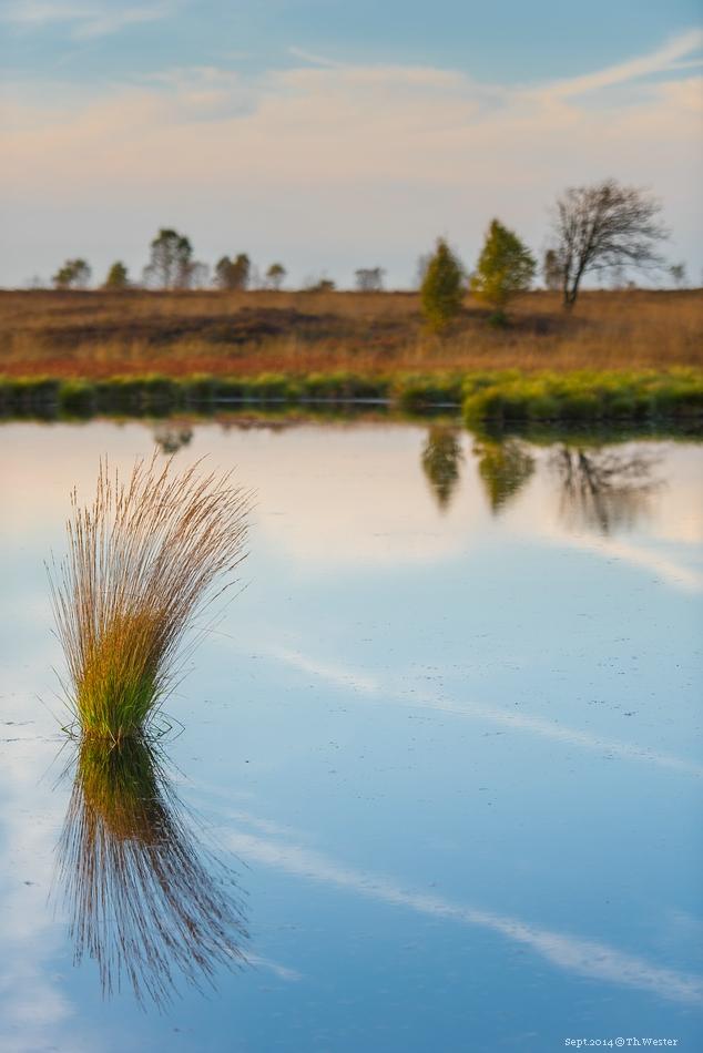 Die Spiegelungen des Moors sind teils interessant anzuschauen (B186)