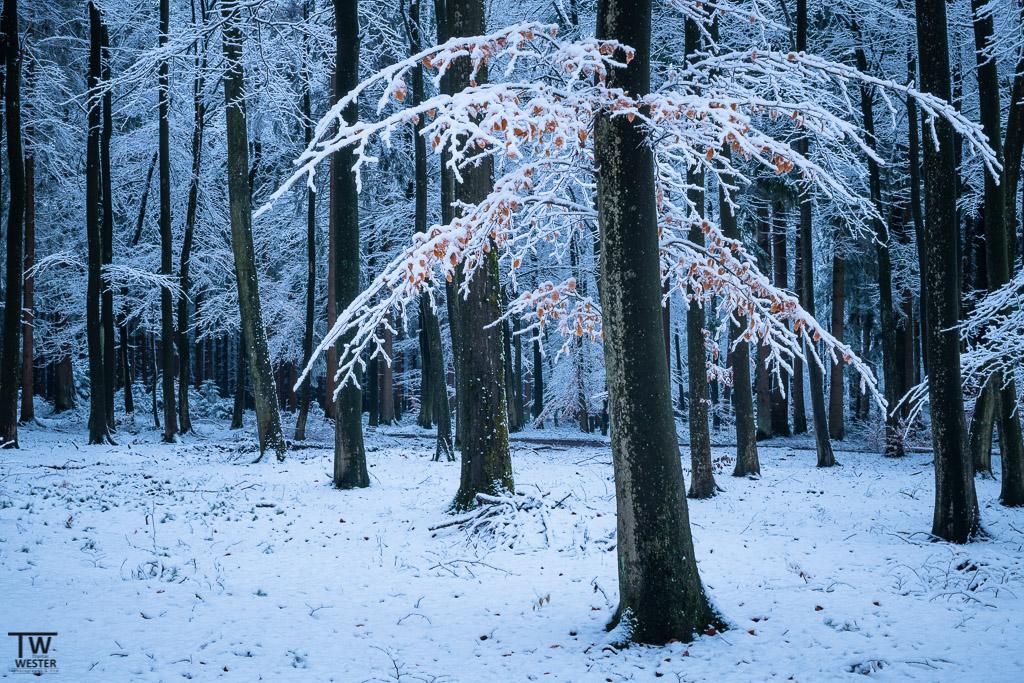 Begonnen habe ich die Serie in einem kleinen Wald, in dem sich an einigen Bäumen noch Herbstbätter zeigten (B1234)
