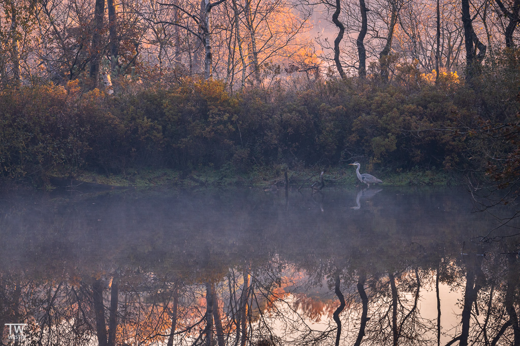 Für Kormorane oder (wie hier) Graureiher bieten die Moorgebiete einen hervorragenden Lebensraum (B1856)