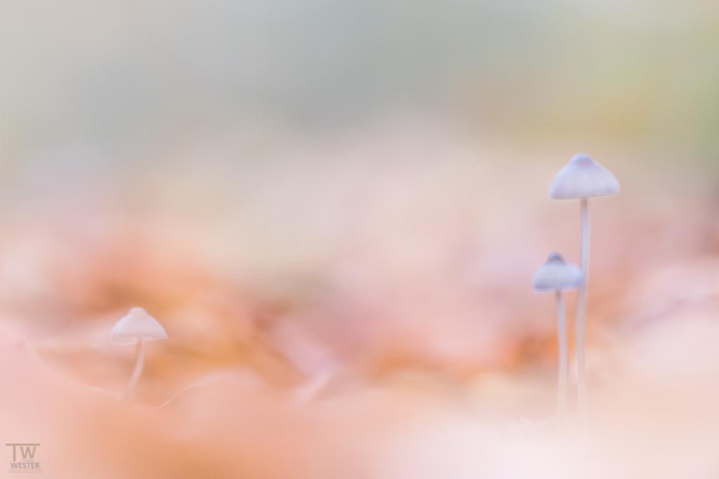 Etwas Abstraktes aus der Welt der Pilze: durch die absichtliche (leichte) Unschärfe sieht das Bild meines Erachtens nach aus wie ein Aquarell (B1080)