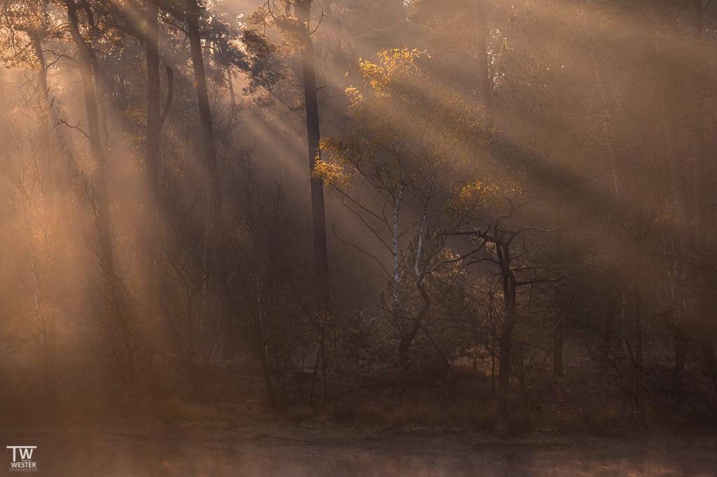 Die Lichtstrahlen wurden in den -an Gewässern liegenden- Wäldern deutlich sichtbar (B1862)