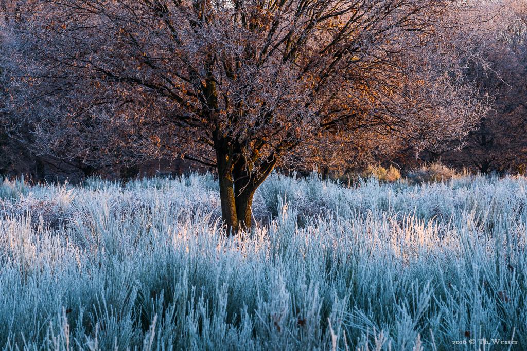 Früh am Morgen (B837)