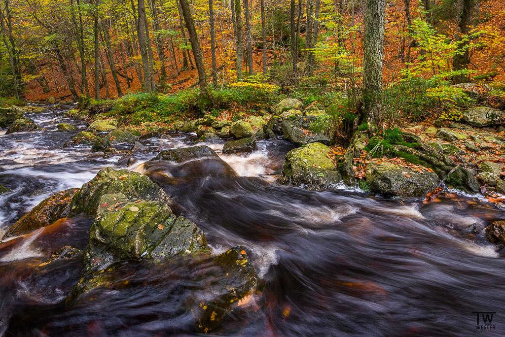 Fluss abwärts... (B1147)
