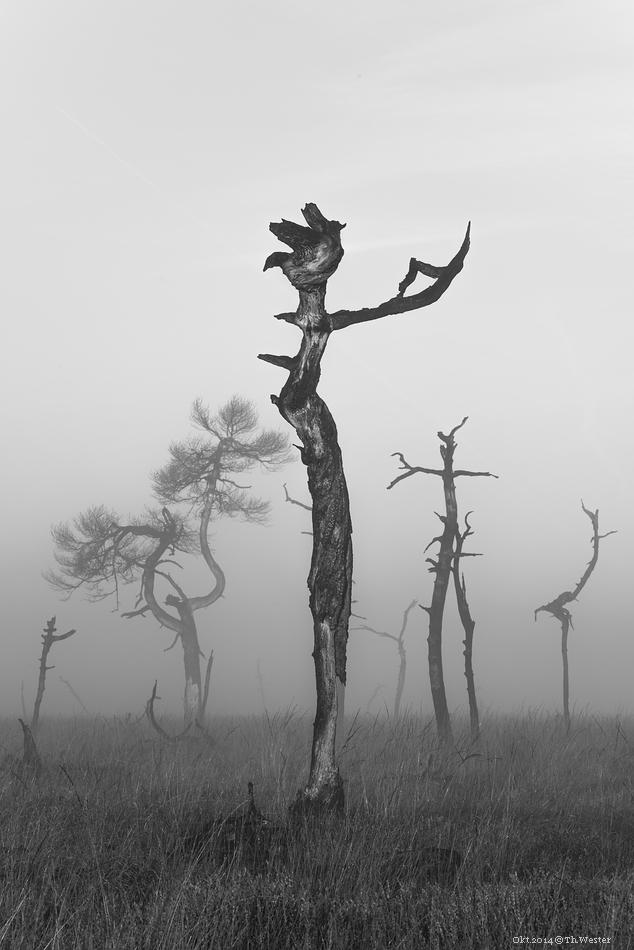 Was die Formen anging, so bildete man sich ein, teils mehr zu erkennen, als nur durch Waldbrand abgestorbenes Holz ;-) (B193)
