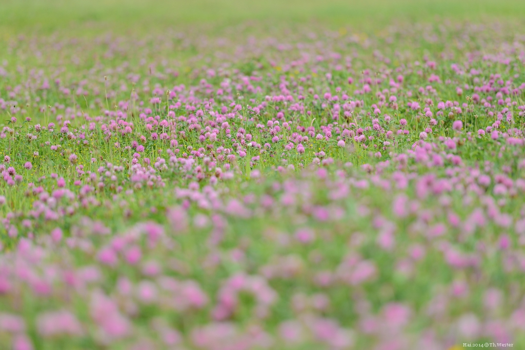 Blumenwiese (B179)